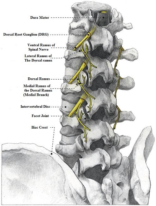 Facet Joint Syndrome | e-algos